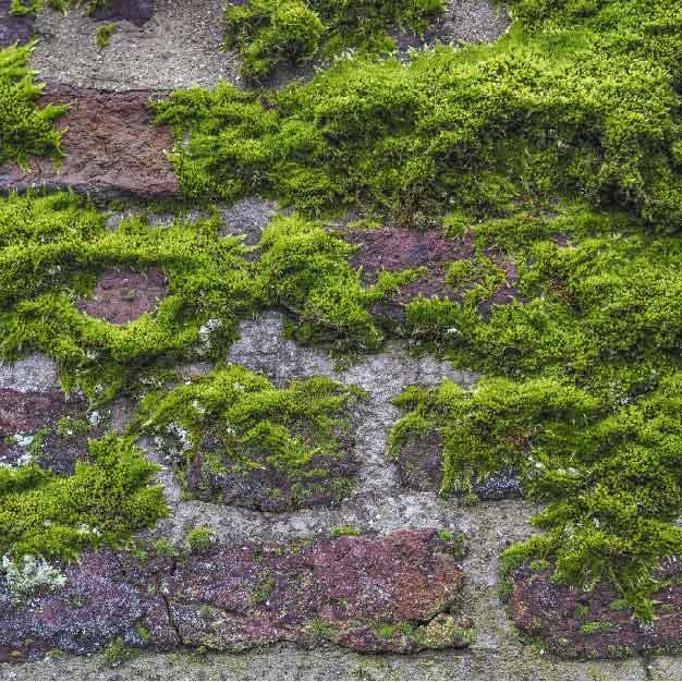 mos-gevelreiniging-friesland-groningen